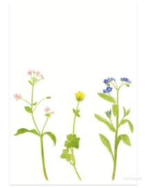 postkaart | Lentebloemen