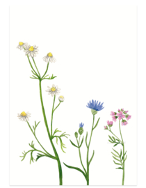 postkaart | Wilde bloemen