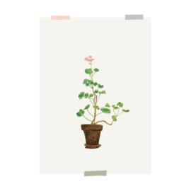 print | House geranium (2 pieces)