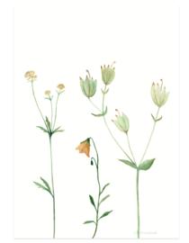postcard | Mountain flower orange
