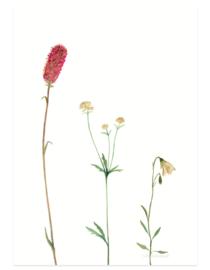 postkaart | Bergbloemen roze