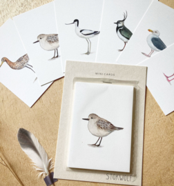 mini kaartjes | Wad- en weidevogels (set)