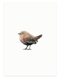 postkaart | Winterkoninkje