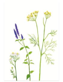 postcard | Flower tea
