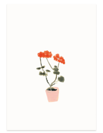 postkaart | Geranium