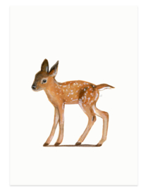 postcard | Young deer