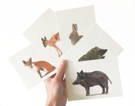 postkaart | Vos
