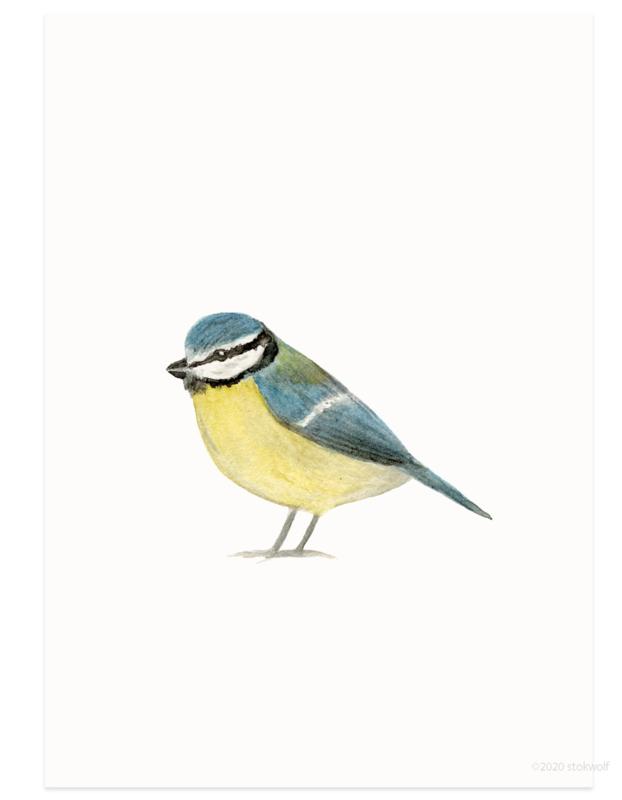 postcard | Blue tit watercolor