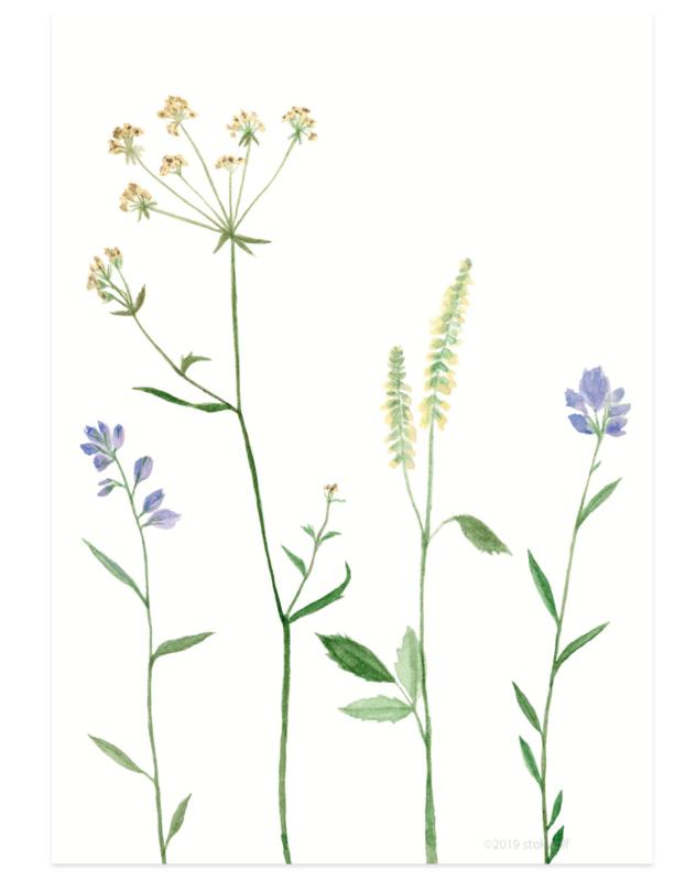 postkaart | Bergbloemen lila