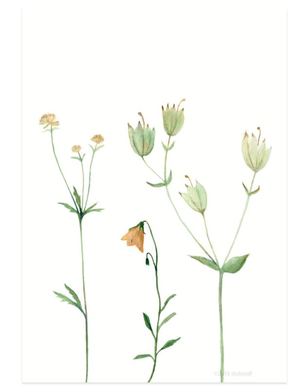 postkaart | Bergbloemen oranje