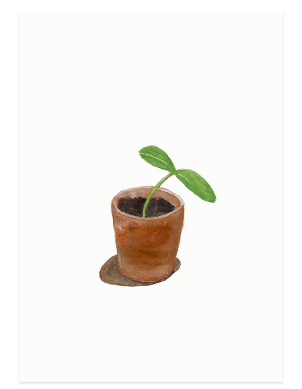postkaart   Pompoenplantje