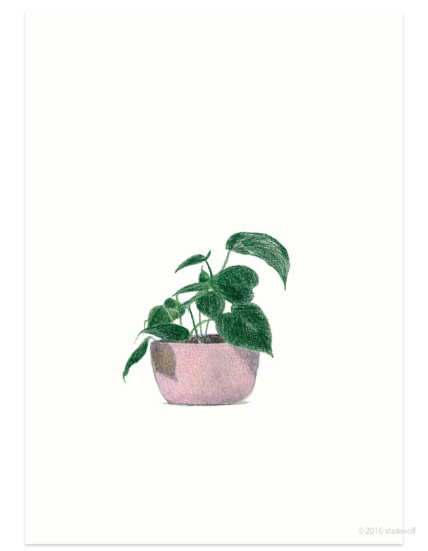 postkaart | Philodendron Cordatum