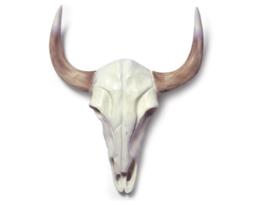 Skull buffalo nature