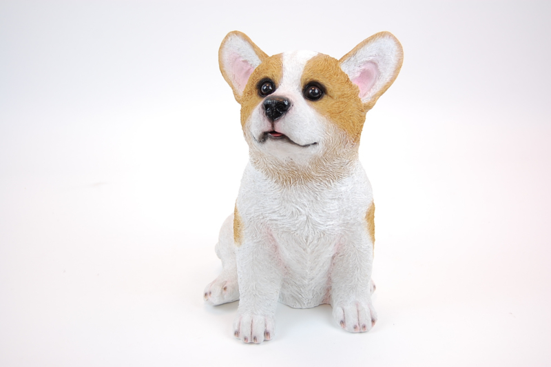 Hond pup