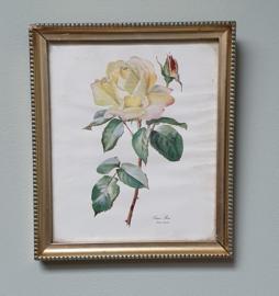Kleine rozenprent