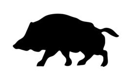 Sticker Wild zwijn