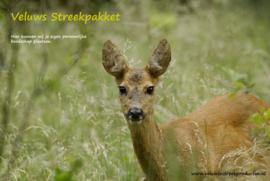 Veluws Streekpakket - Reegeit in jong lentegroen