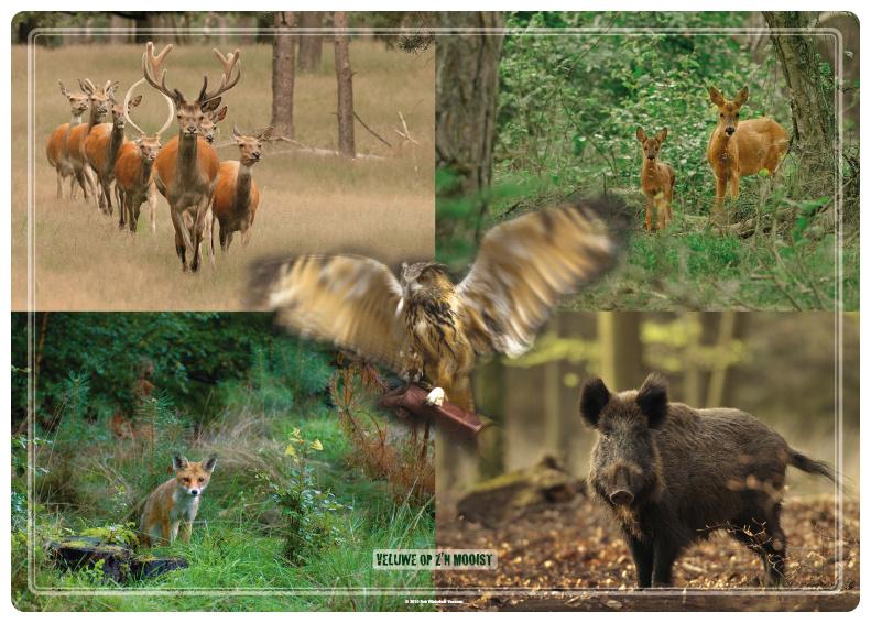 Placemat: Wild op de Veluwe