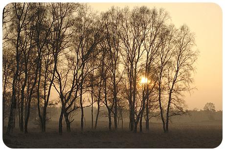 Placemat: Veluws landschap met opkomende zon