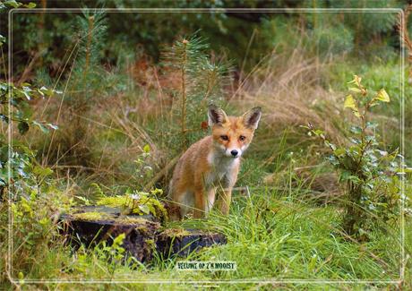 Placemat: Jong vosje op de uitkijk