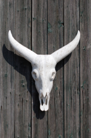 Buffalo hoofd wit