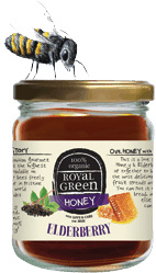 Frenchtop Royal Green Elderberry honey