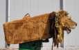 Rodeo Leeuw (380V)