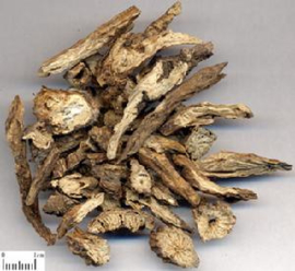 Bai Tou Weng - Radix Pulsatillae - Chinese Pulsatilla Root