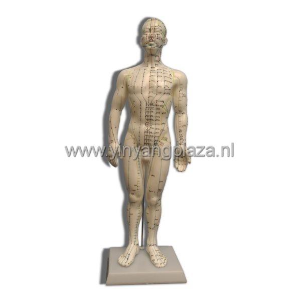 Acupunctuur model pop -Mannelijk 50 cm