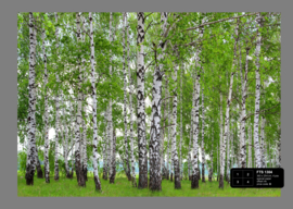 Fotobehang AG Design FTS1304 Berry Birch 4-d