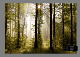 Fotobehang AG Design FTS0181 Morning Forest 4-d