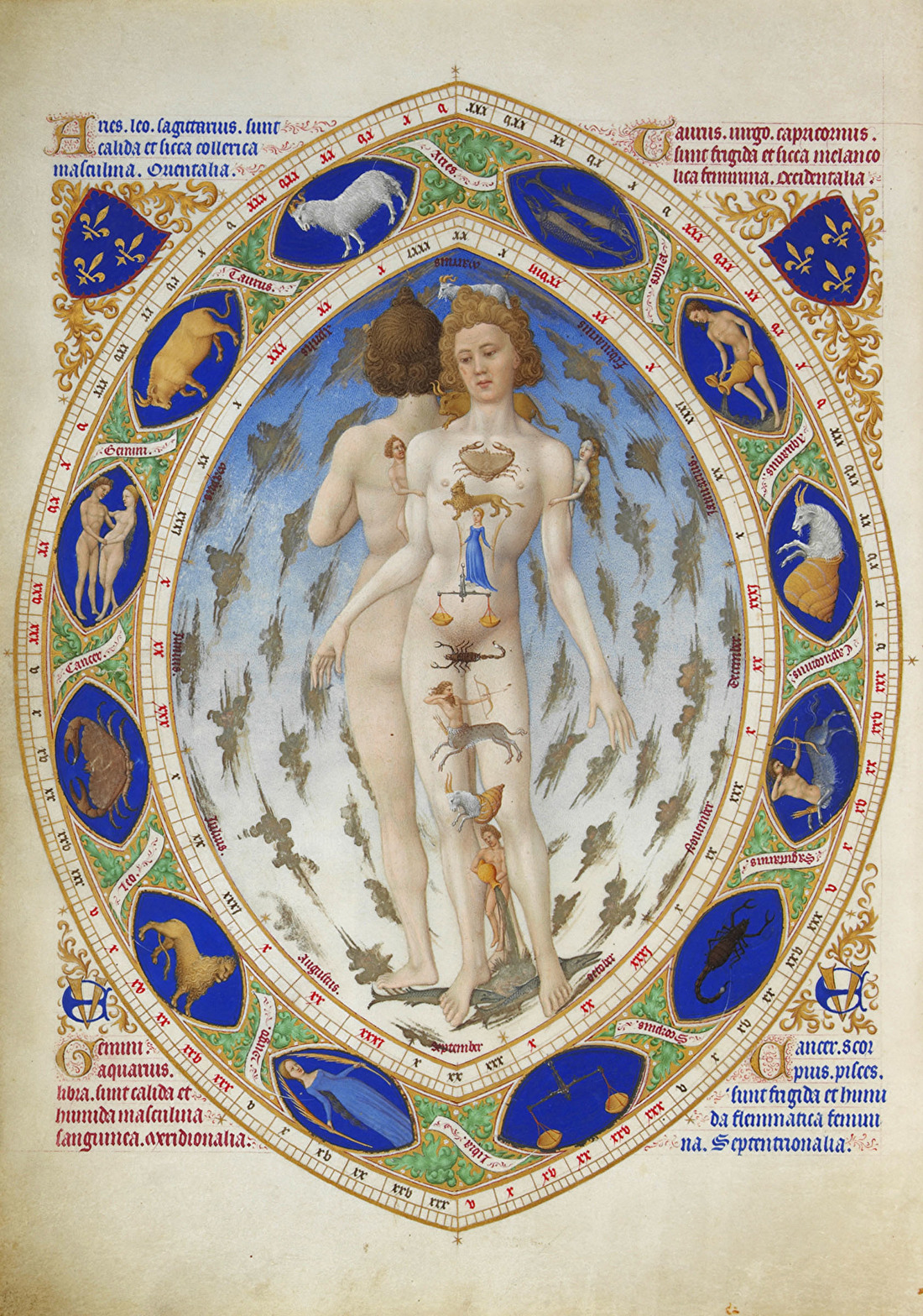 De Anatomische mens