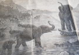 Wandkleed olifant