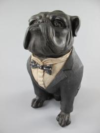 Hond Buldog