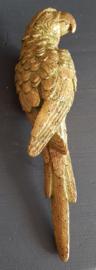 Papegaai goud rechts