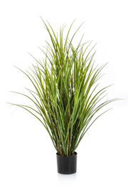 Reed Grass plant 110 cm