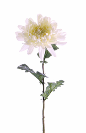 Chrysant wit