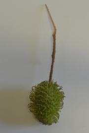 Rambutan Groen