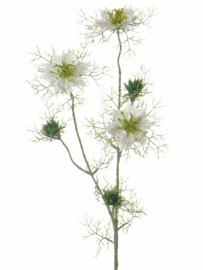 Nigella (persian Jewel) wit