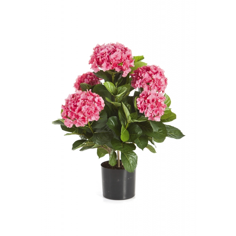 Hortensia in pot roze