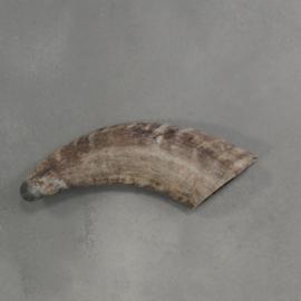 Hoorn mini bruin