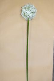 Alliumbol white