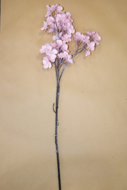 Iced Prunus Reims Pink