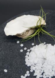 Navulling parels voor de oesterschelpen