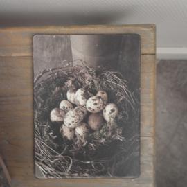 Bordje Sober nest met eieren