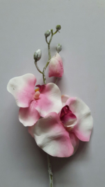 Orchidee white wash/roze