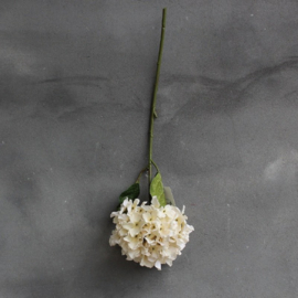 hortensia creme/wit