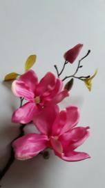 magnolia fuchsia