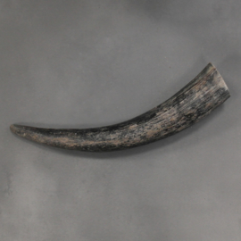 Cow horn raw
