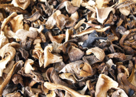 Gedroogde bospaddenstoelen